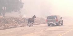 Relacionada caballo