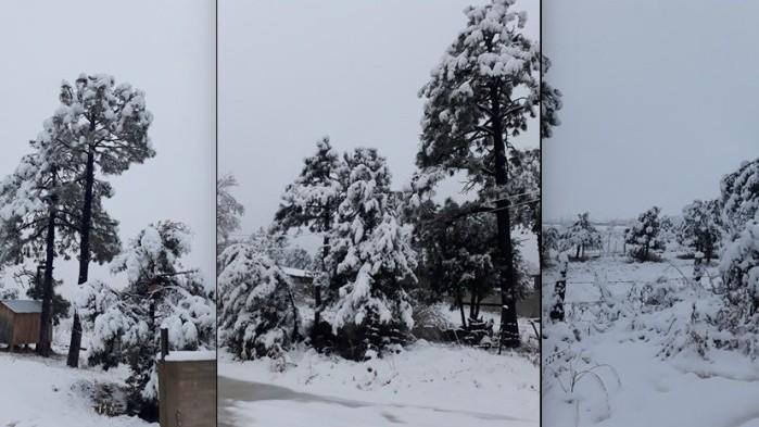 Nieve madera
