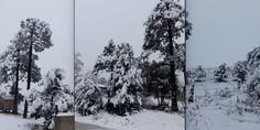 Relacionada nieve madera