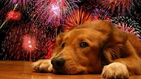La Florida suspende fuegos artificiales de año nuevo por daño a animales