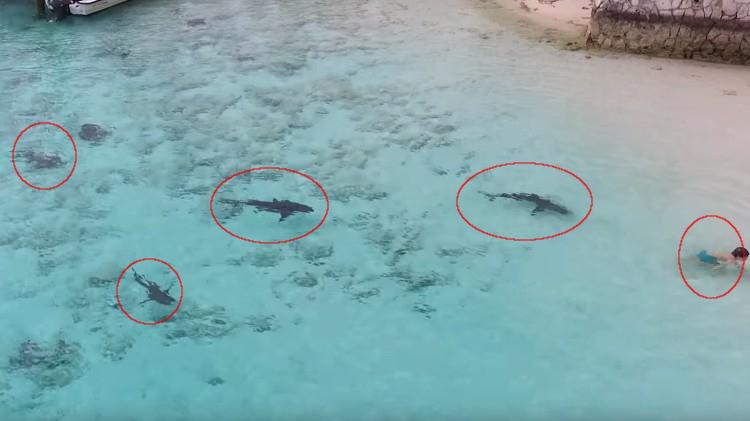 Ni o tiburones las bahamas
