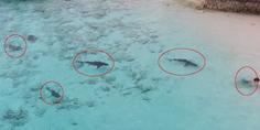 Relacionada ni o tiburones las bahamas