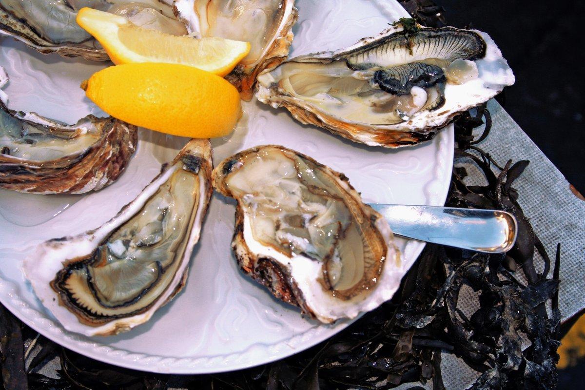 Por comer ostras crudas la mató una bacteria carnívora