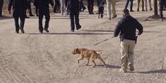 Relacionada operativo james camacho binomios caninos