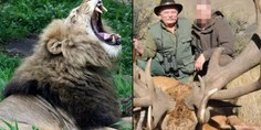 Relacionada leon sudafrica cazador