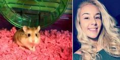 Relacionada hamster