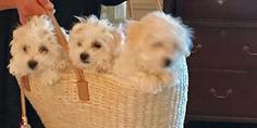 Relacionada perritos