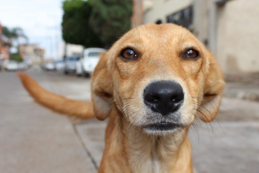 Perro callejero 1 830x553