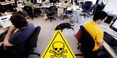 Relacionada veneno oficina
