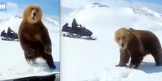 Relacionada oso rusia