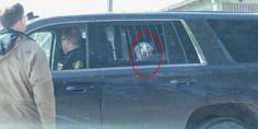 Relacionada perro arrestado viral