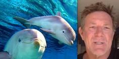 Relacionada delfines ataque organizado surfista