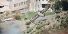 Relacionada pelidcan