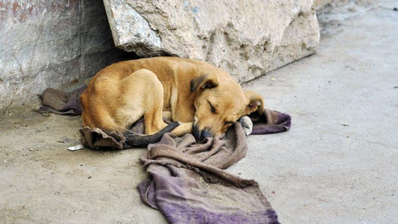 Cárcel en el Edomex por alimentar a perros callejeros
