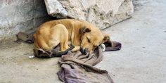 Relacionada perros callejeros 777x437