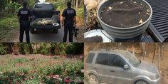 Relacionada encontraron planti os de amapola cerca de las playas de zihuatanejo