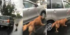 Relacionada video atan a perro al auto y lo arrastran bajo la lluvia