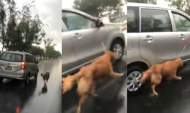 Video atan a perro al auto y lo arrastran bajo la lluvia