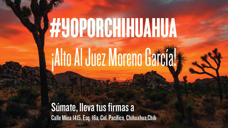 Peticion change org chihuahua