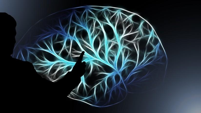 La anatomía de tu cerebro tiene relación con tu nivel de ingresos ...