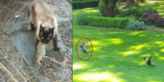 Relacionada gato buho conejo