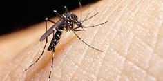 Relacionada zika