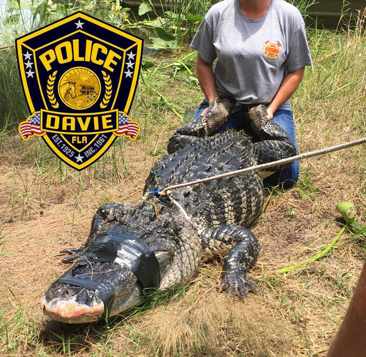 Alligator accused of killing woman 12182253 ver1.0