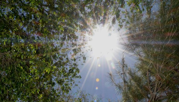 Clima para hoy  ciudad jua rez  12 de junio  temperatura ma xima