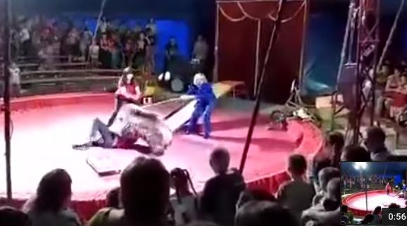 Oso ataca ferozmente a empleado de circo [Internacional]