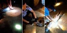 Relacionada perro vomitado serpiente encontraba vida