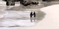 Relacionada ping inos pasean playa sud frica 04 julio