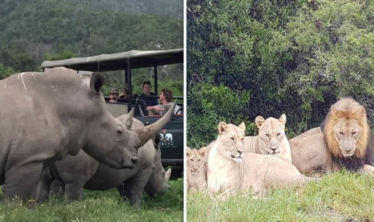 Leones se devoraron tres cazadores que querían mutilar rinocerontes — Atroz