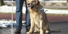 Relacionada perro guia para ciegos 750x498