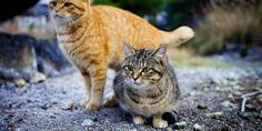 Relacionada gatos 02