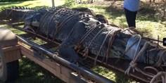 Relacionada cocodrilo gigante 3