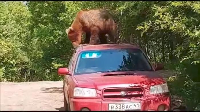 Oso beb  auto rusia