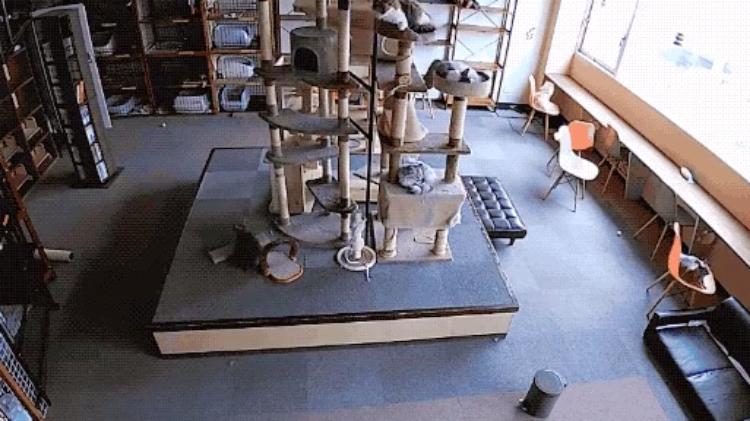 Varios gatos presienten un terremoto segundos antes de que sacuda Osaka