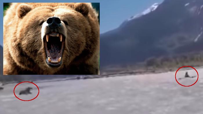 Oso grizzli
