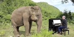 Relacionada elefanted