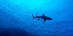 Relacionada tibur n
