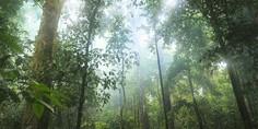 Relacionada bosque
