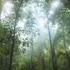 Thumb bosque