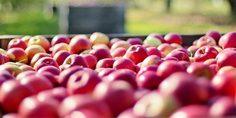 Relacionada manzanas 610x389