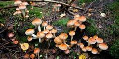 Relacionada hongos