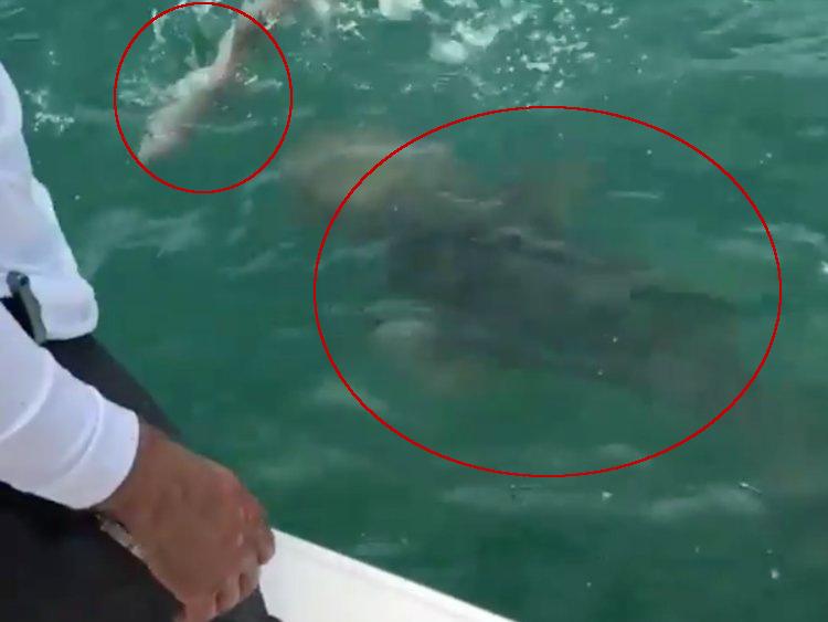 Mero devora tibur n