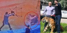 Relacionada pelea leon tigre circo mosc