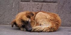 Relacionada perro callejero 1