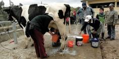 Relacionada productores leche