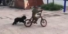 Relacionada mono y perro