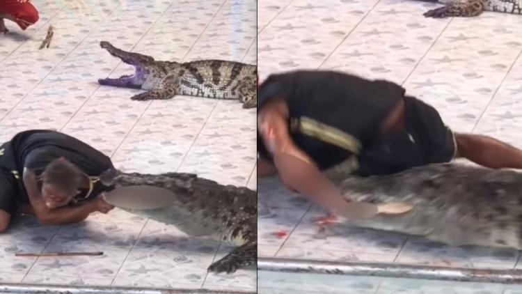 El sangriento ataque de un cocodrilo a su domador